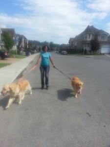 promenade des chiens à l'extérieur de la pension et garderie.